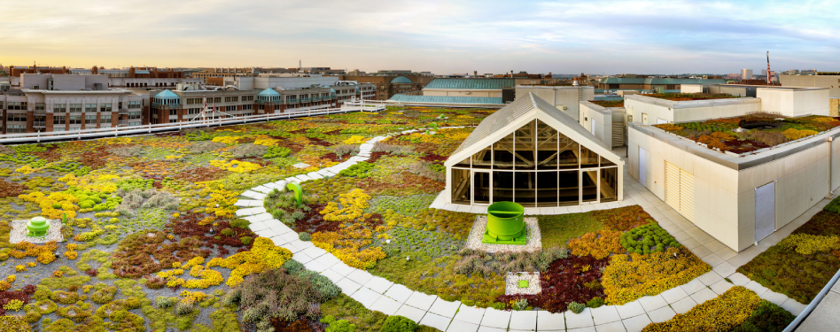 How To Choose And Install A Green Roof Green Home Guide